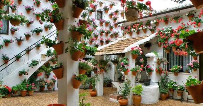 Festival De Los Patios Cordobeses The Cordoba Patio Competition