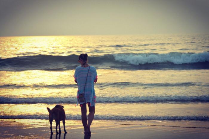 Bortgives gratis og hund gul De dejlige