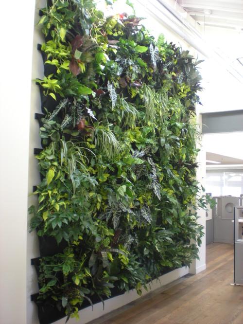 Ideas de decoraci n jardines verticales caseros fotos - Plantas para jardines verticales ...