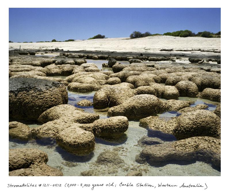 Las formas de vida más antiguas de la tierra (fotos)