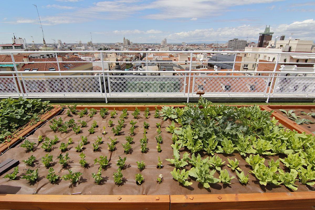 El huerto urbano m s grande del mundo est en madrid - Huerto en la terraza ...
