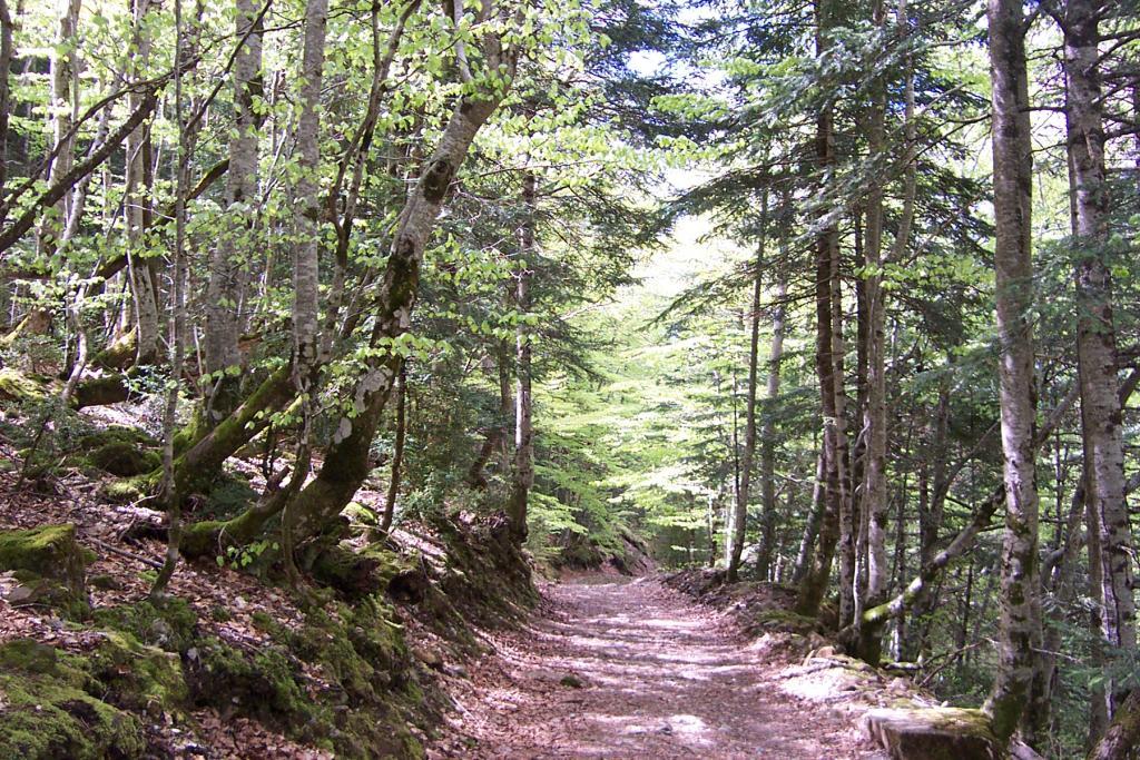 Los bosques son para el Otoño: de excursión por los siete mejores hayedos de España