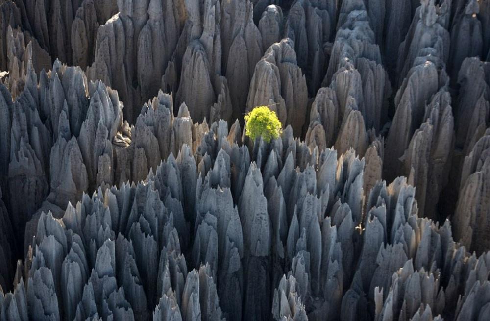 Bosque de rocas (Madagascar)