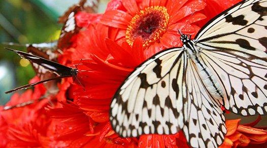 Mariposas en el aeropuerto de Changi Shangai