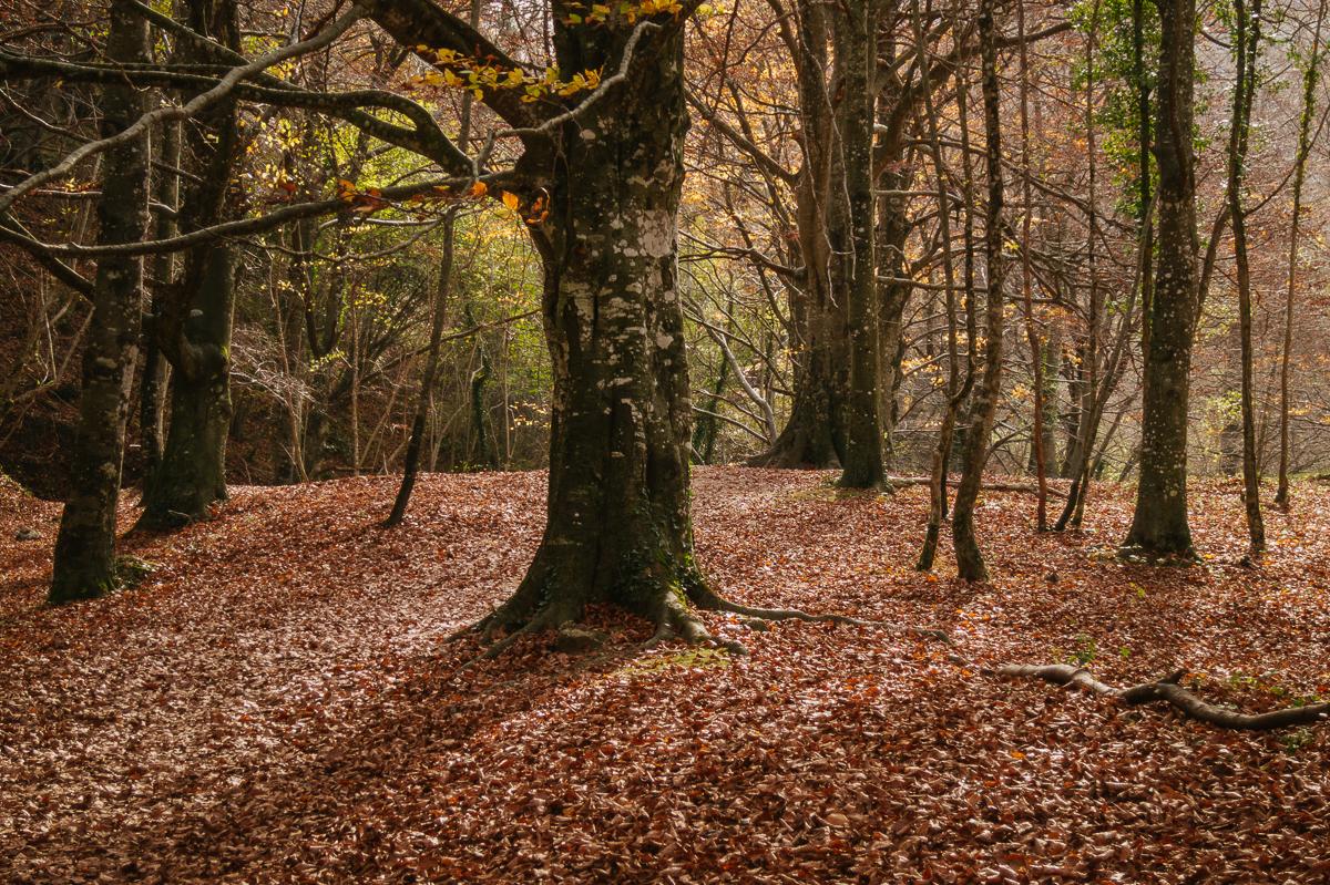 Bosque Urederra Navarra