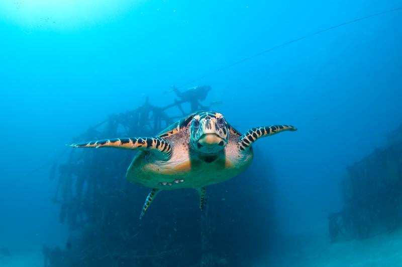 Bucear en el mar de Malasia
