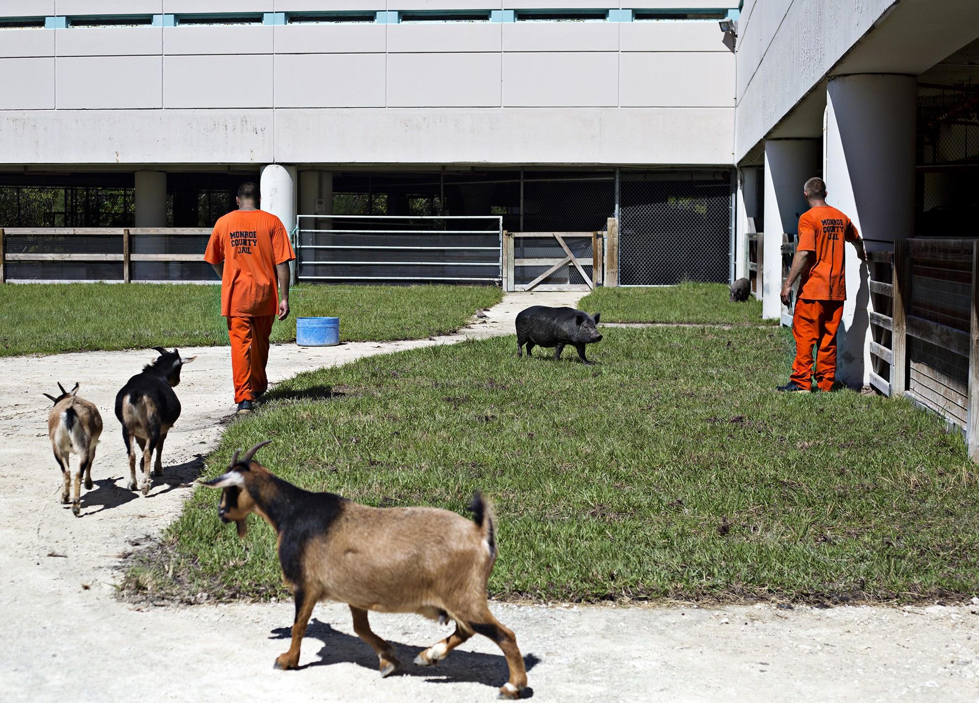 El centro penitenciario con animales en EEUU