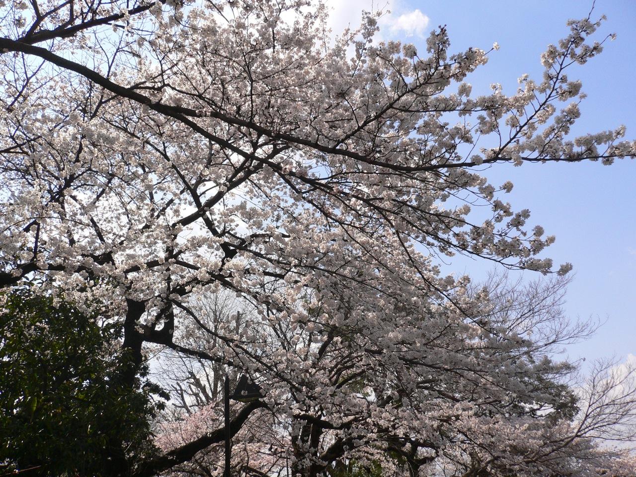 Ueno Park (Tokio)
