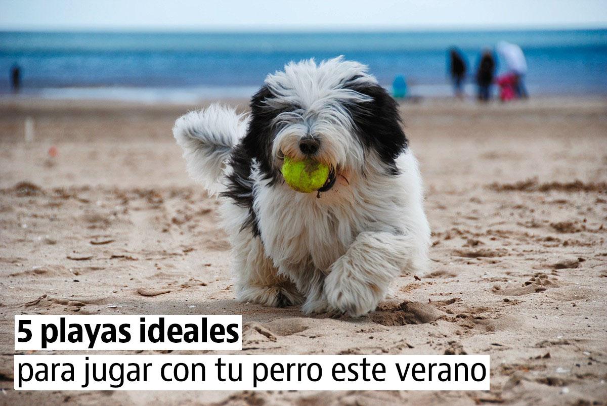 Las 5 mejores playas para tus vacaciones con perro