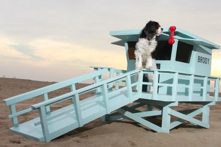 Una caseta para perros socorristas