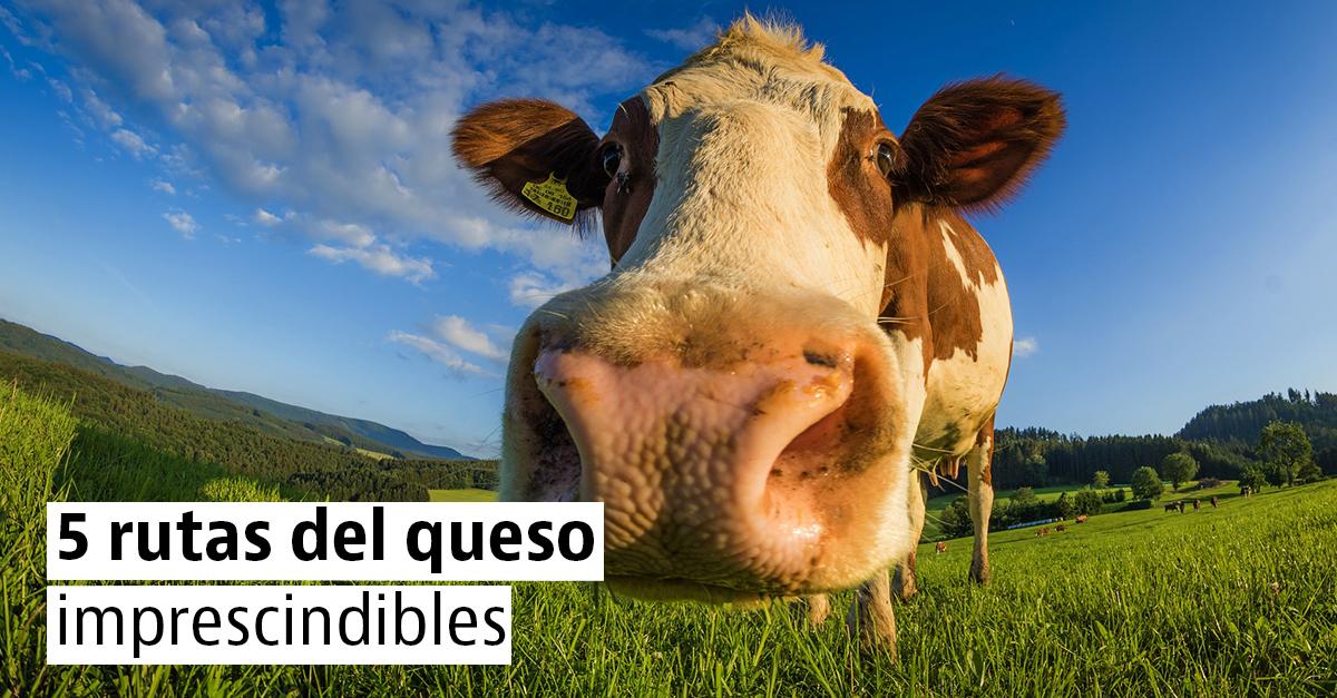 La Ruta del queso: los 5 quesos más sabrosos de España