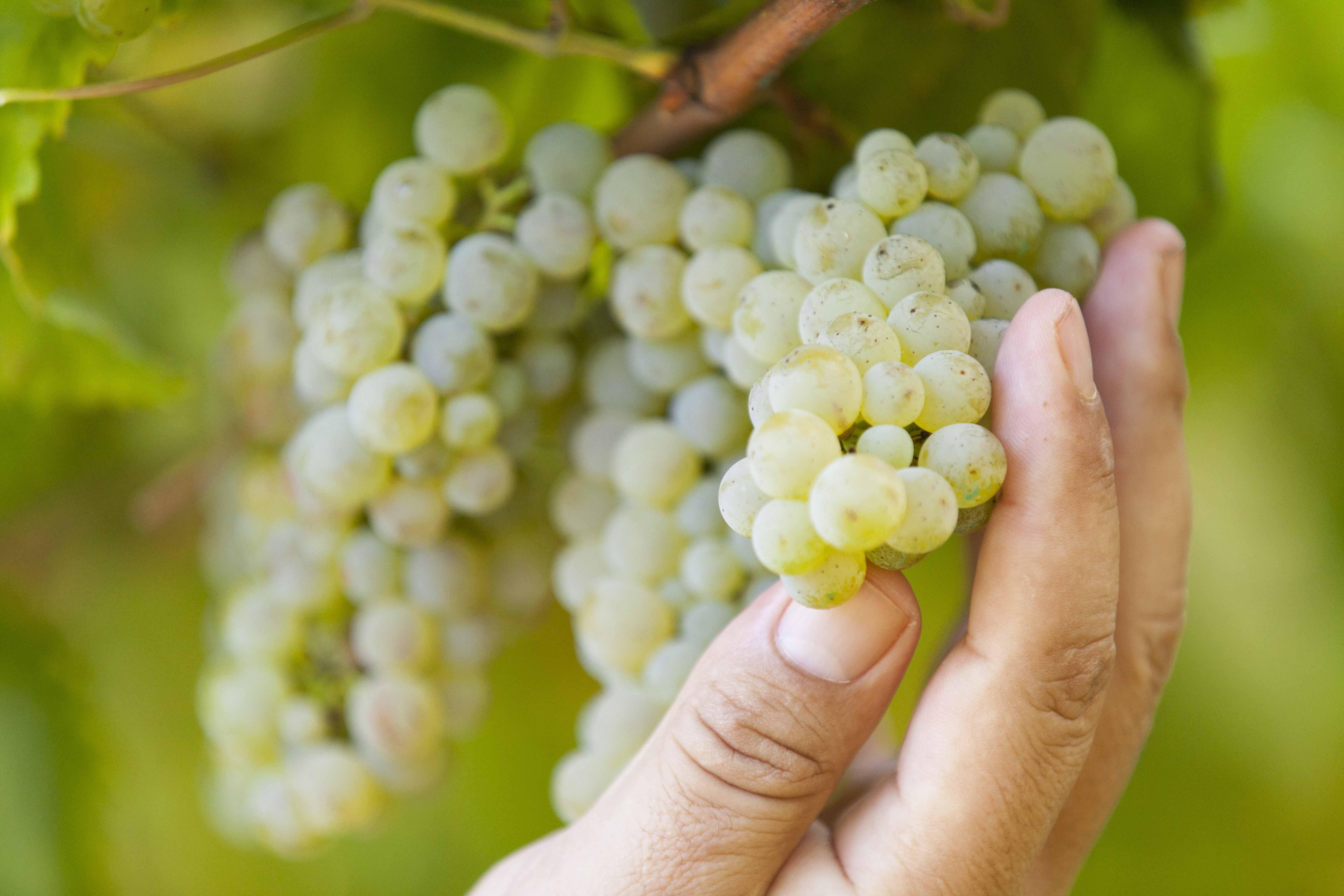 Ruta del vino de Rías Baixas