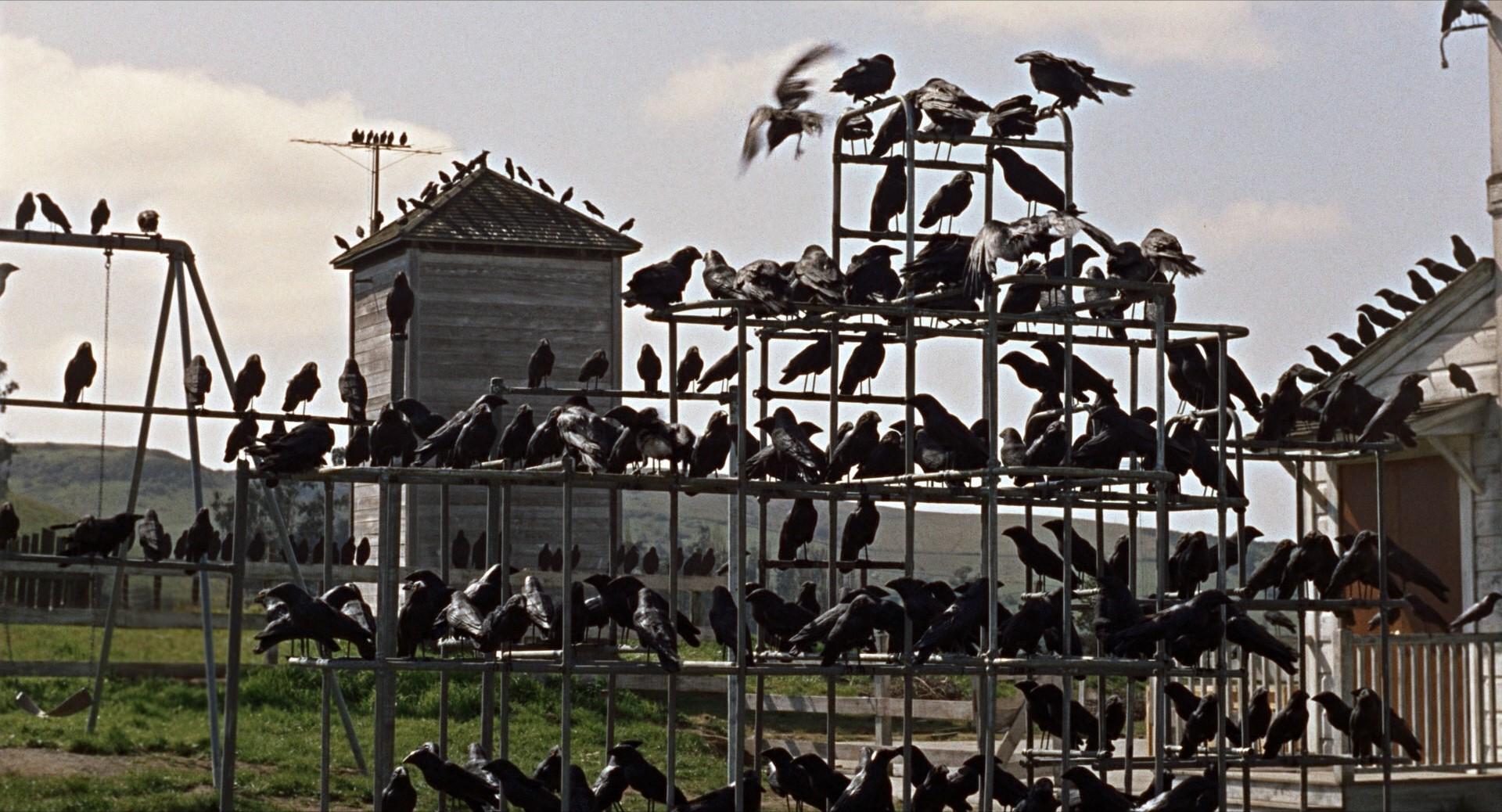 Fotograma de la película 'Los pájaros'