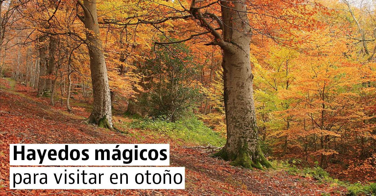 Los hayedos más espectaculares para disfrutar de los colores del otoño