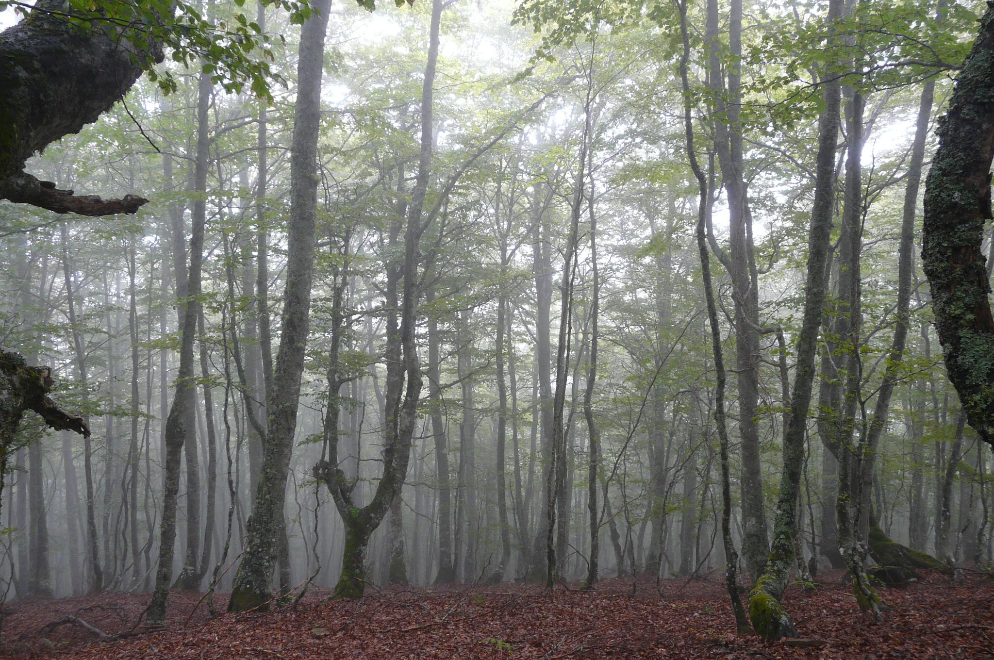 Parque Natural de Redes