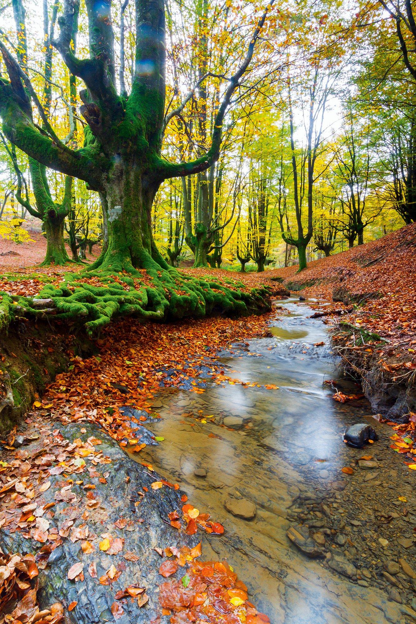 Parque Natural de Gorbea, País Vasco, España / National Geographic