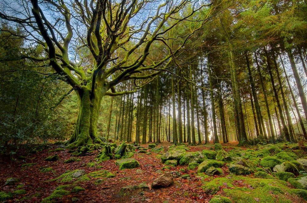 El bosque mágico de Broceliande, Bretaña francesa / National Geographic