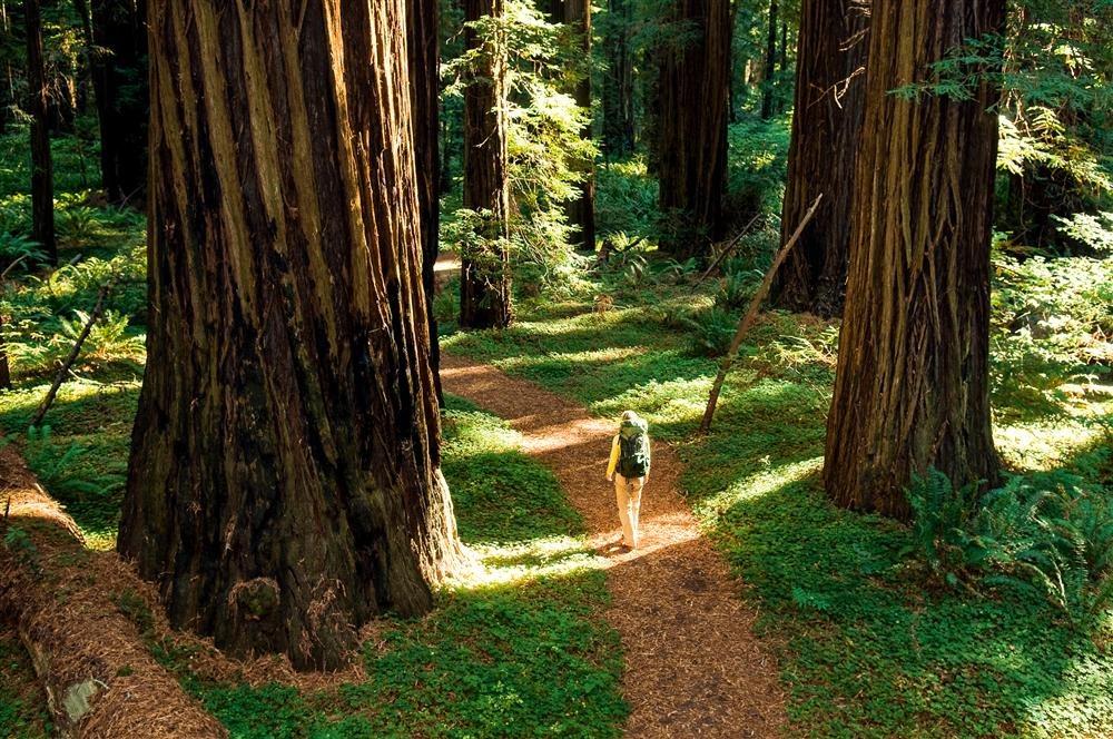 Giant Forest, un hogar para gigantes en California / National Geographic