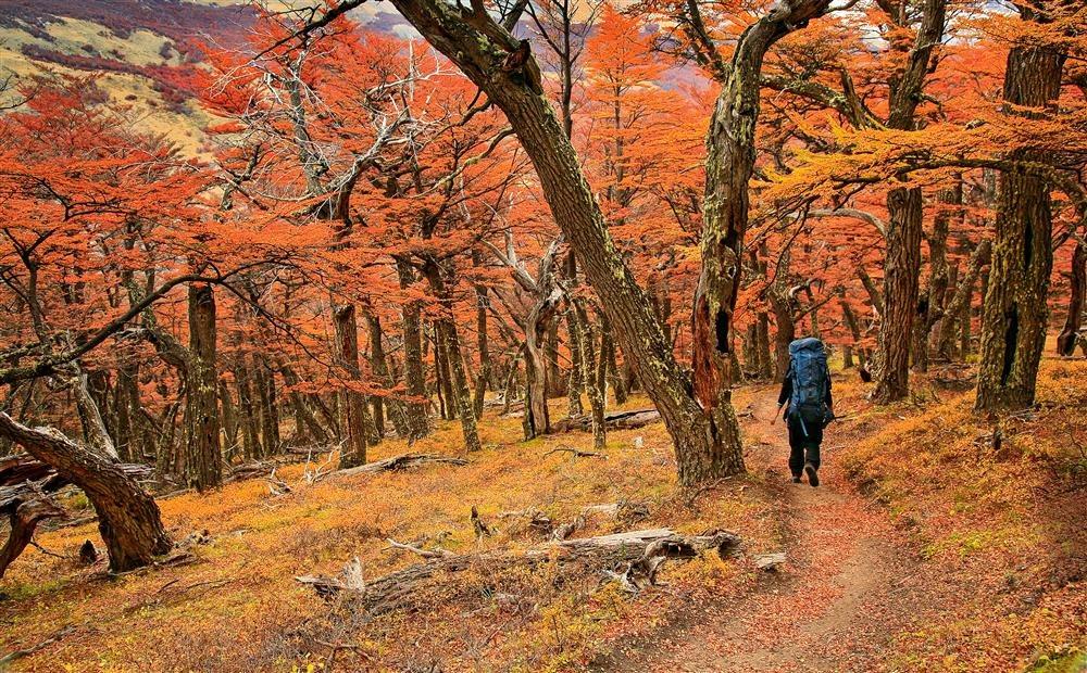 Los bosques de otoño patagónicos, Parque Nacional de los Glaciares, en la provincia argentina de Santa Cruz / National Geographic
