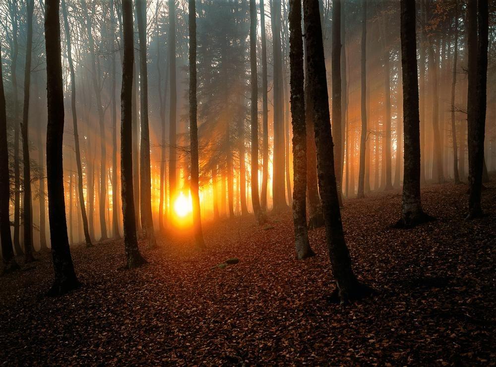 Selva Negra, Alemania / National Geographic