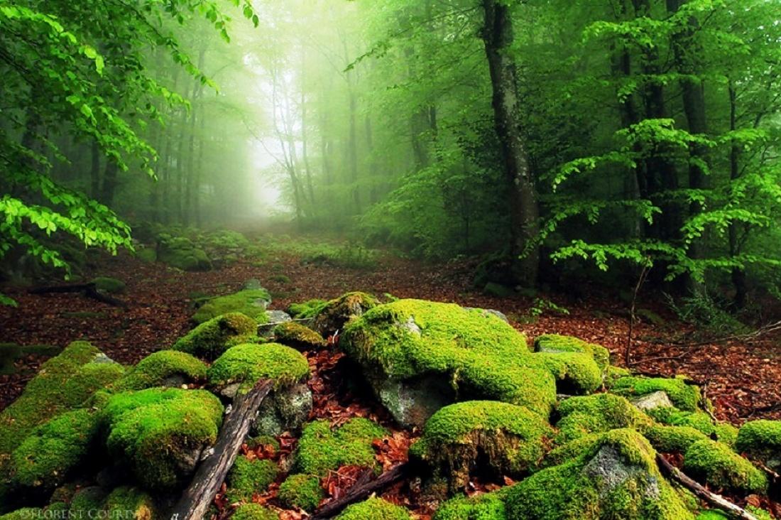Bosque de jade, Nueva Zelanda / National Geographic