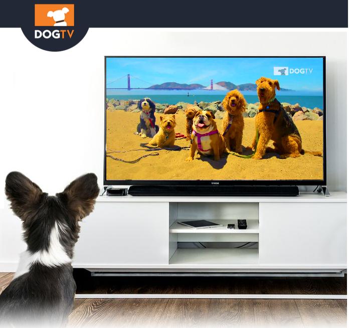 Foto: Dog Tv