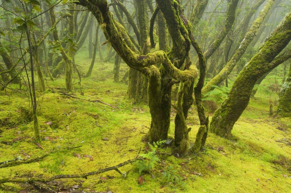 Parque nacional de Garajonay (La Gomera)  / GETTY IMAGES