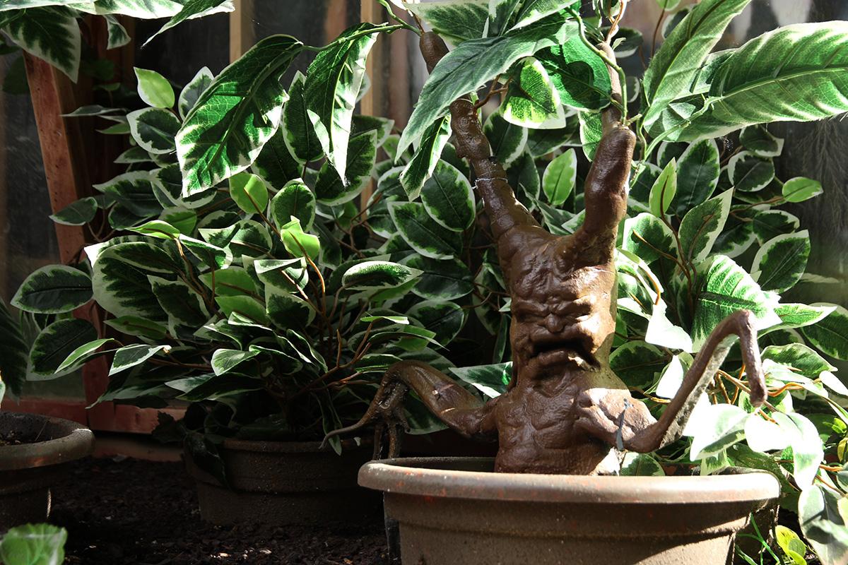 Las chillonas mandrágoras custodian el Real Jardín Botánico