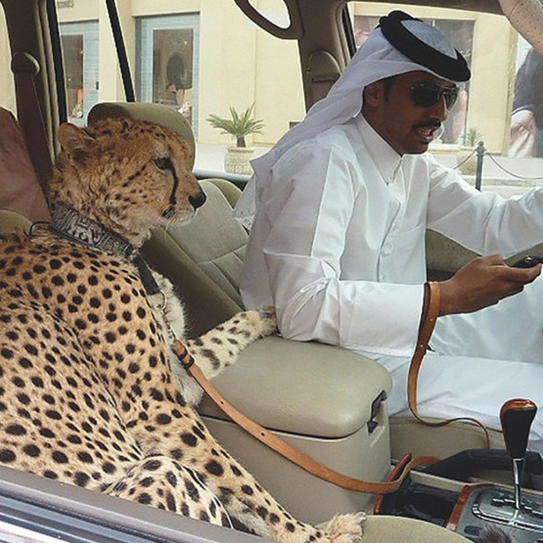 Un leopardo dentro de un coche / Scoop Whoop