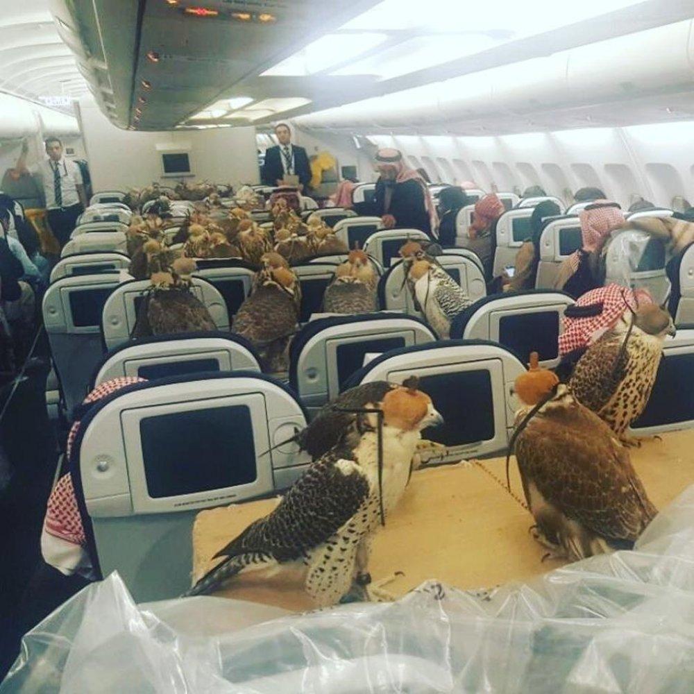 Un príncipe saudí reservó asientos en un avión comercial para sus 80 halcones / Scoop Whoop