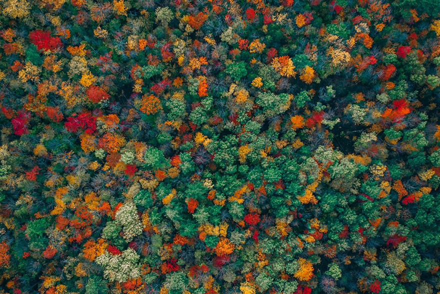 La variedad cromática de un bosque  / Zekedrone