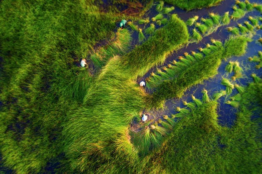 Naturaleza / Tuan Nguyen