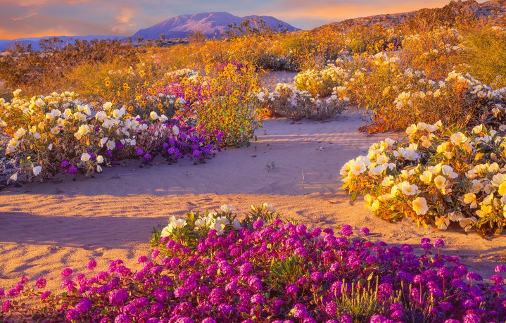 Desierto de flores