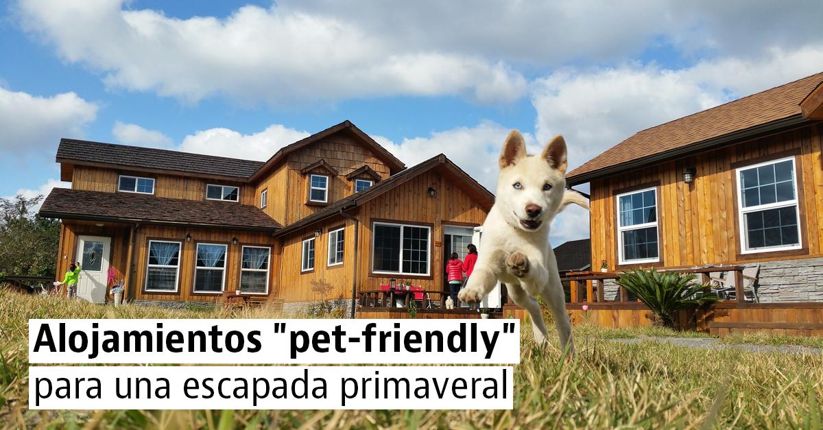 Alojamientos para una escapada con tu perro