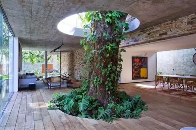 Este árbol crece por un hueco en el interior de la vivienda / Recreo Viral