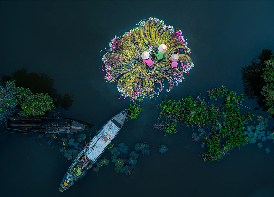 Flowers On The Water / SkyPixel