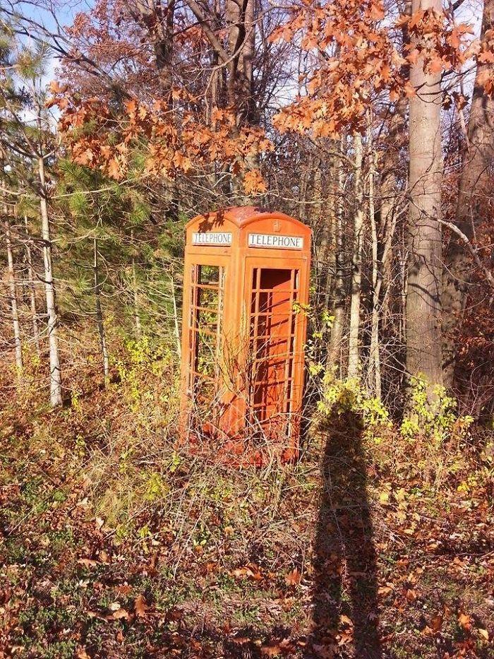 Una cabina de teléfono en medio del bosque / Bored Panda