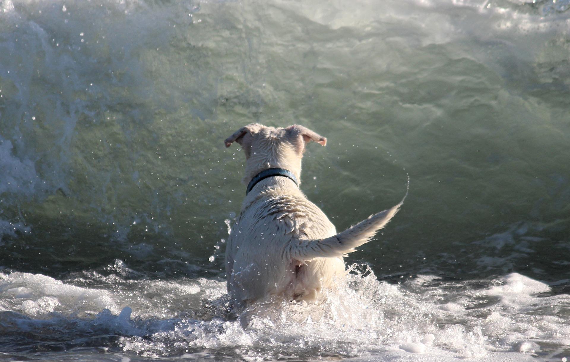 Playa canina de Agua Amarga en Alicante