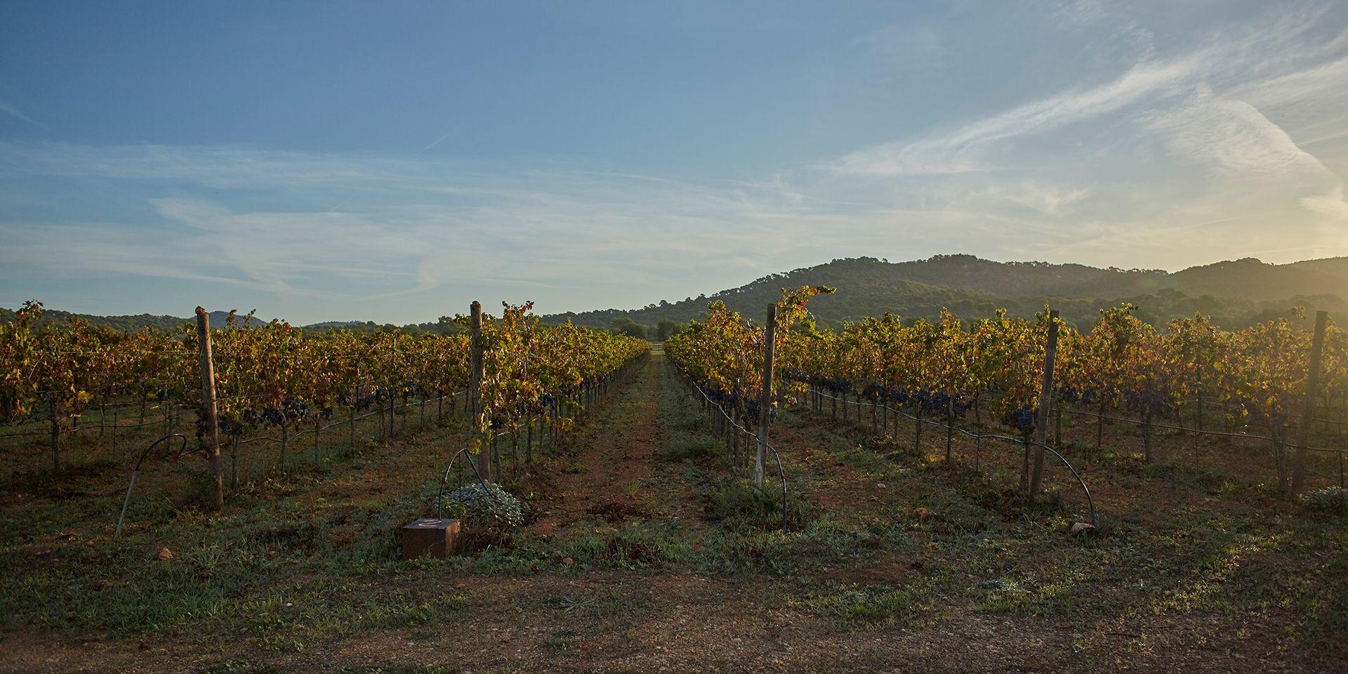 Se dedica a los vinos ecolígicos, aceites y conservas