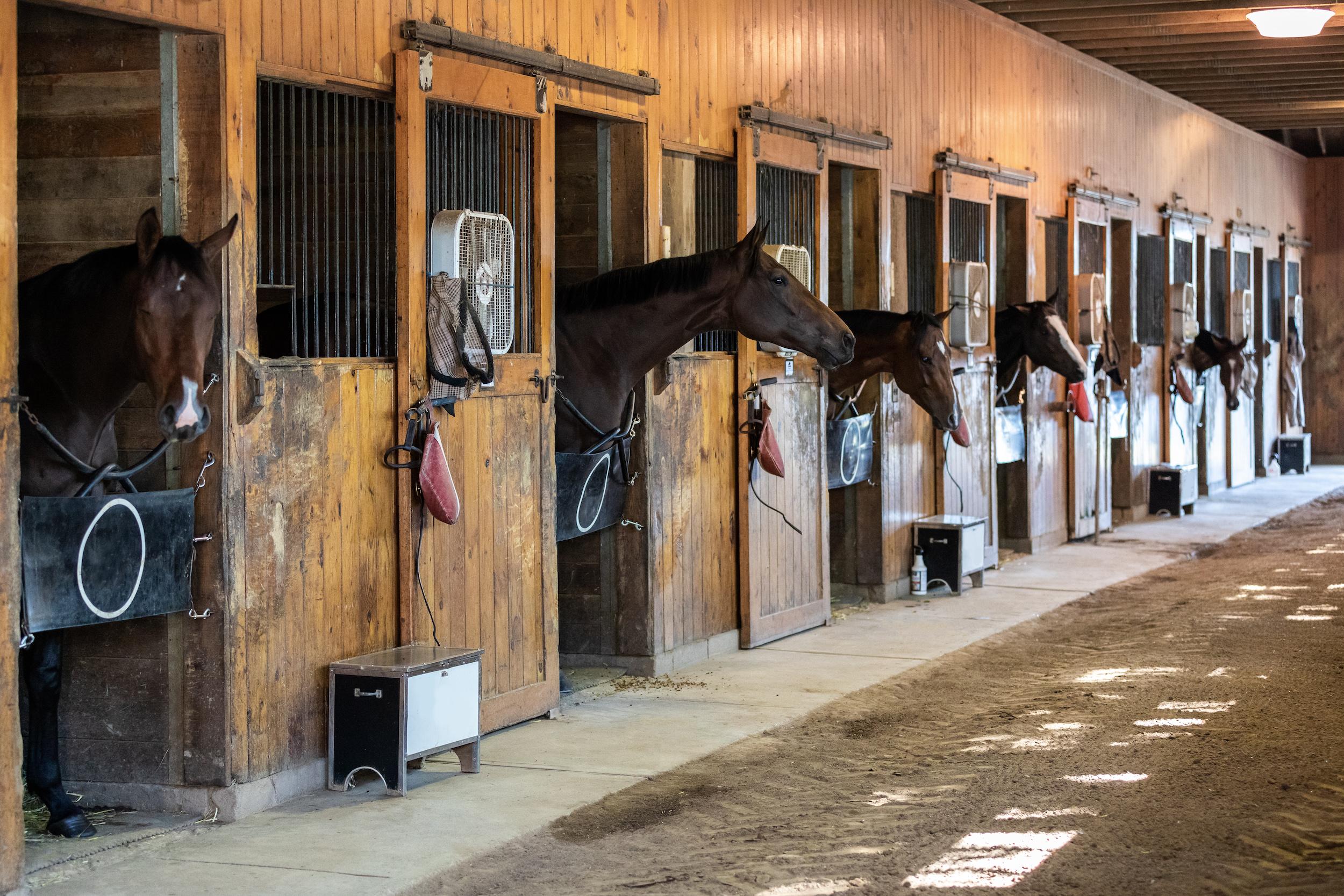Cría de caballos de pura raza