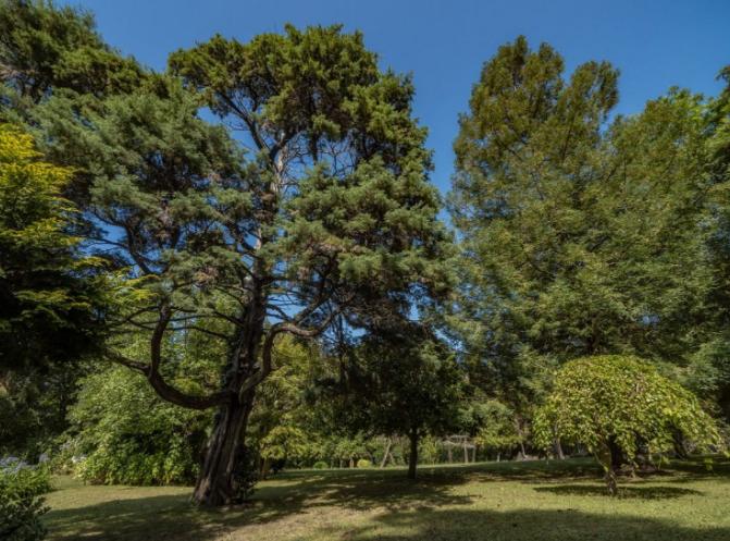 Con árboles de cientos de años