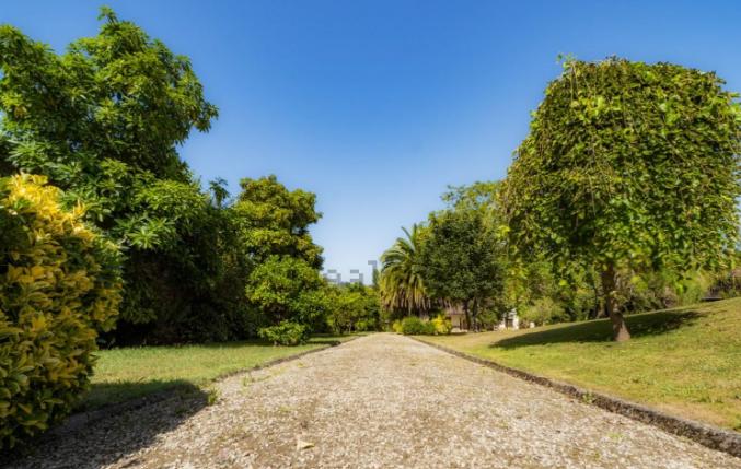 Un camino rodeado de naturaleza que lleva a la casa