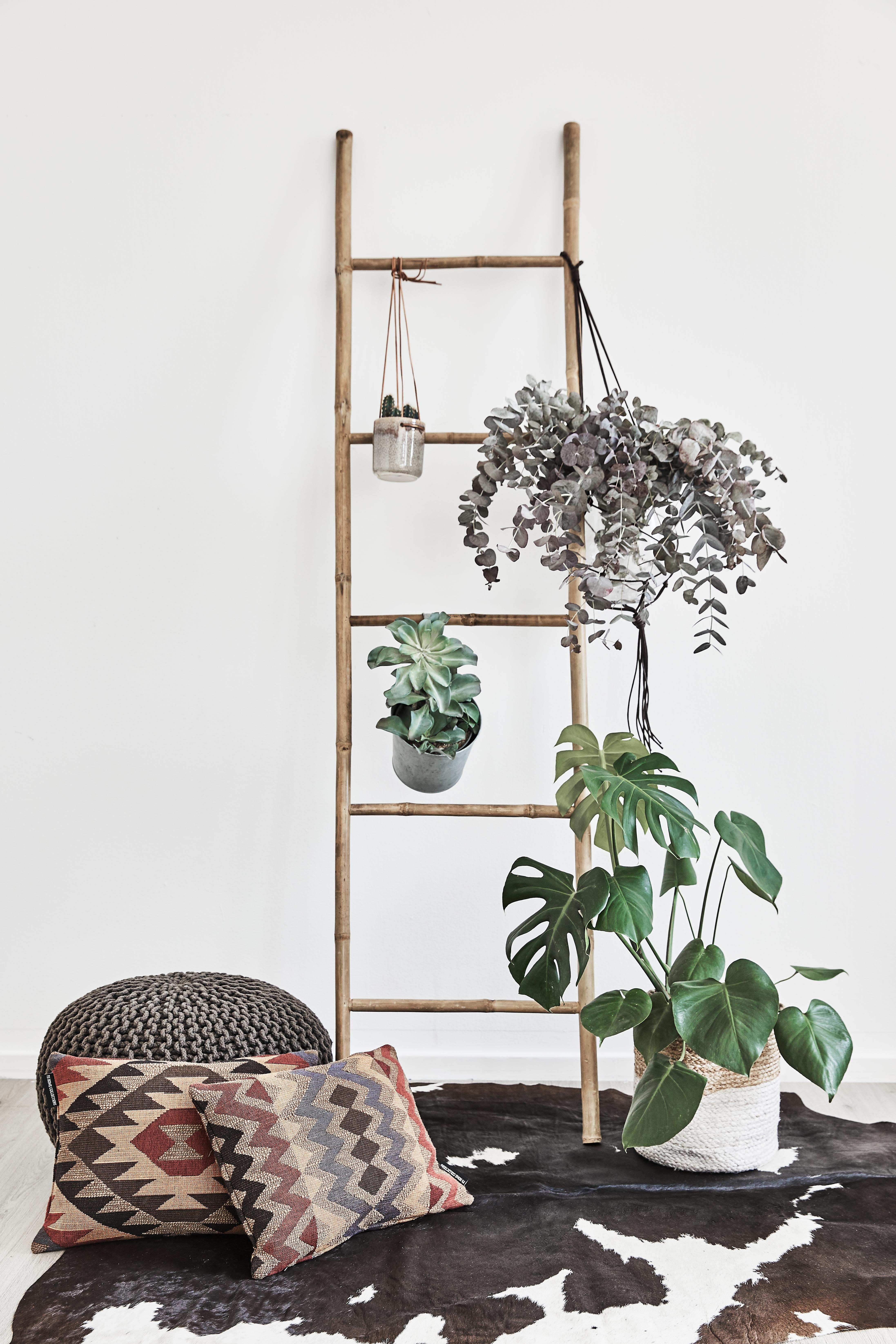Plantas, plantas y más plantas