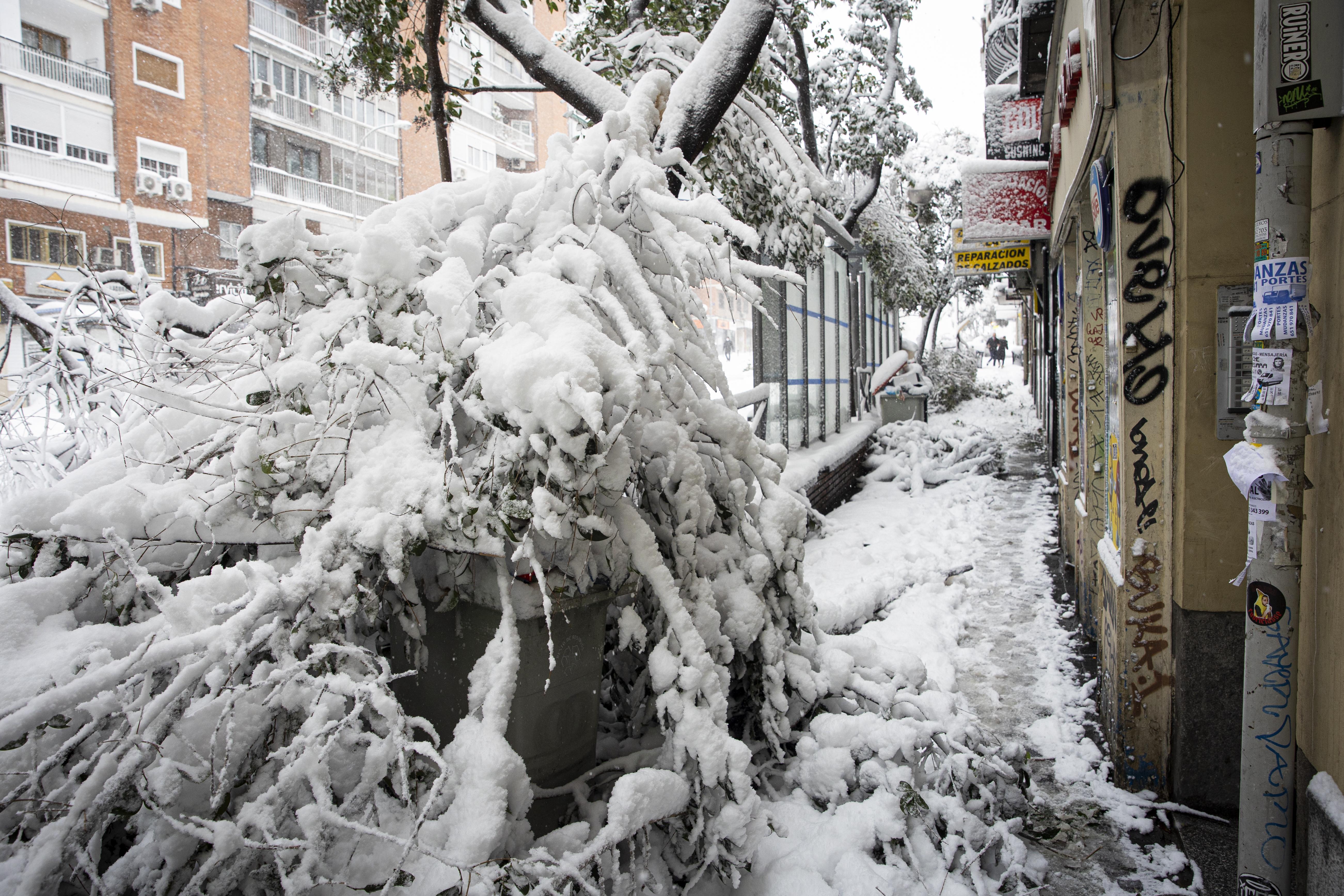 Más de 150.000 árboles de la capital se han visto afectados como consecuencia de la nevada