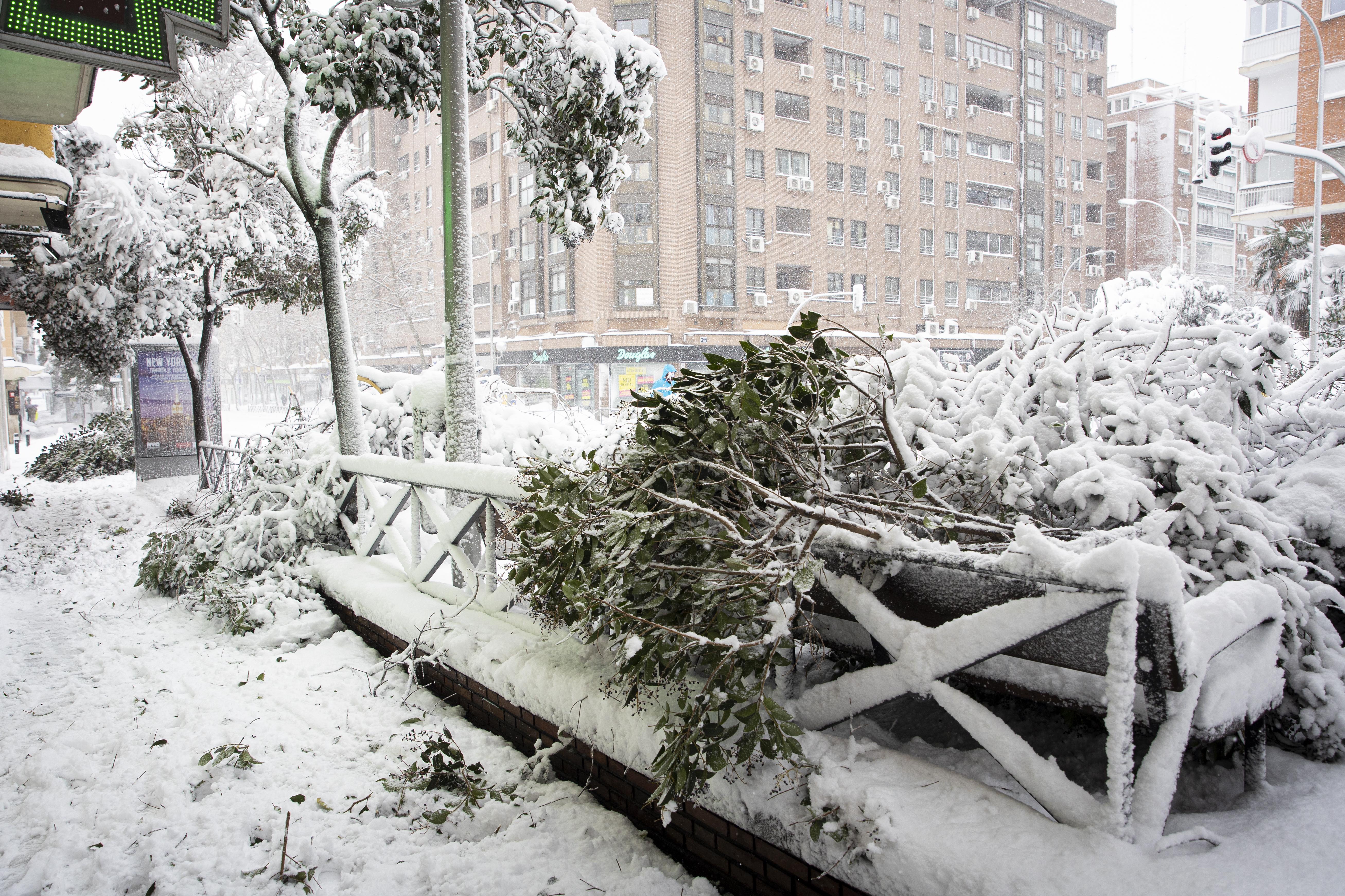 Pero también hubo peligrosas caídas de árboles