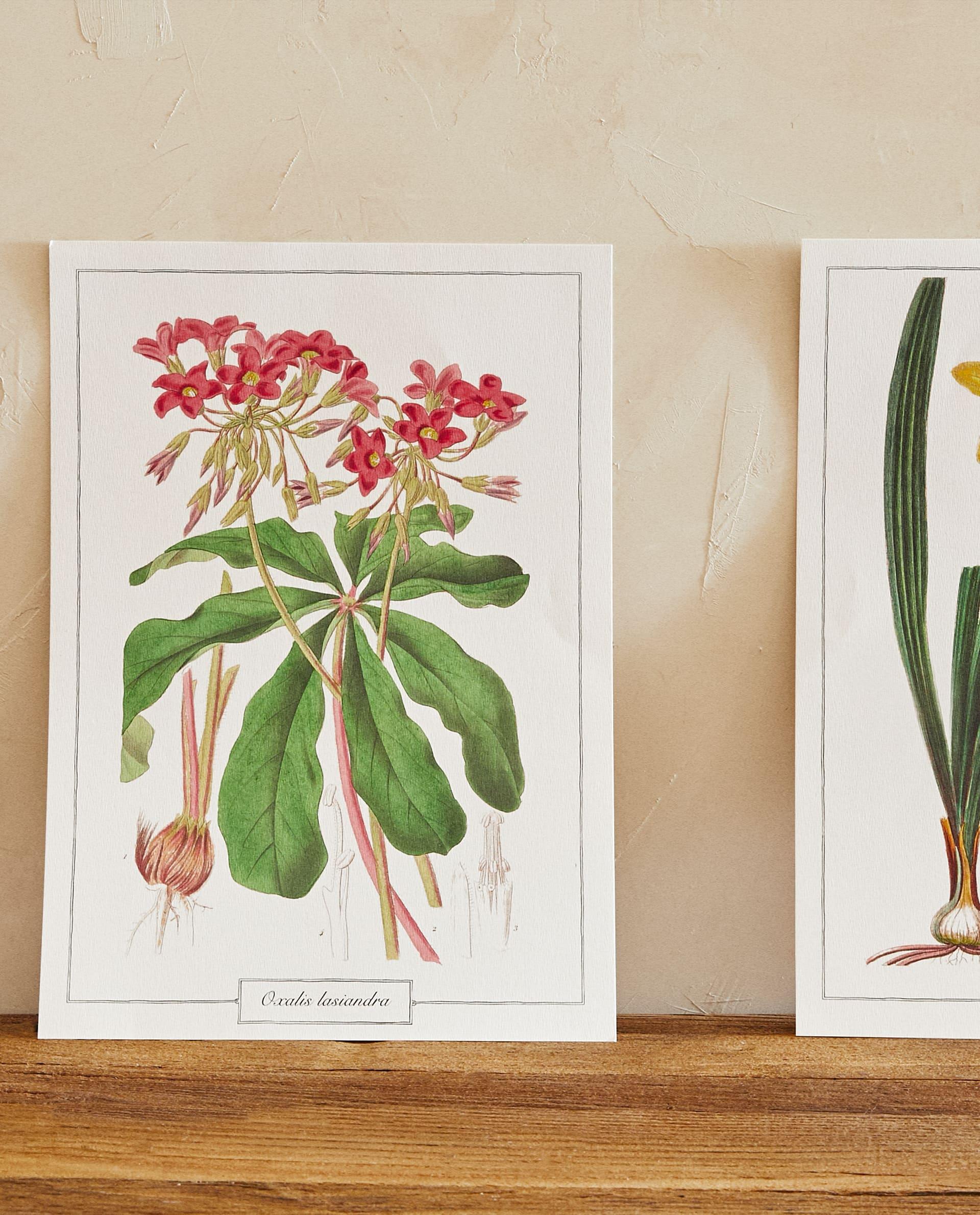Lámina decorativa de papel con motivos florales y botánicos.  Se vende en pack de 2 unidades formato A3 de Zara Home (12,99 €) / Zara Home