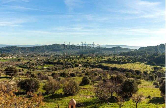 Rodeado de olivos y almendros