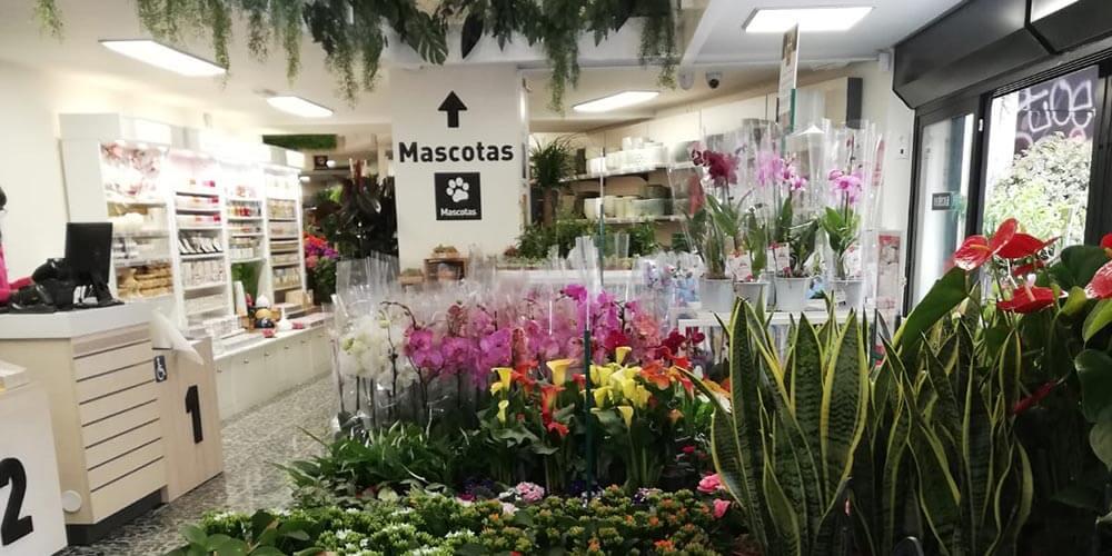 Interior de una tienda de Verdecora / Creative commons