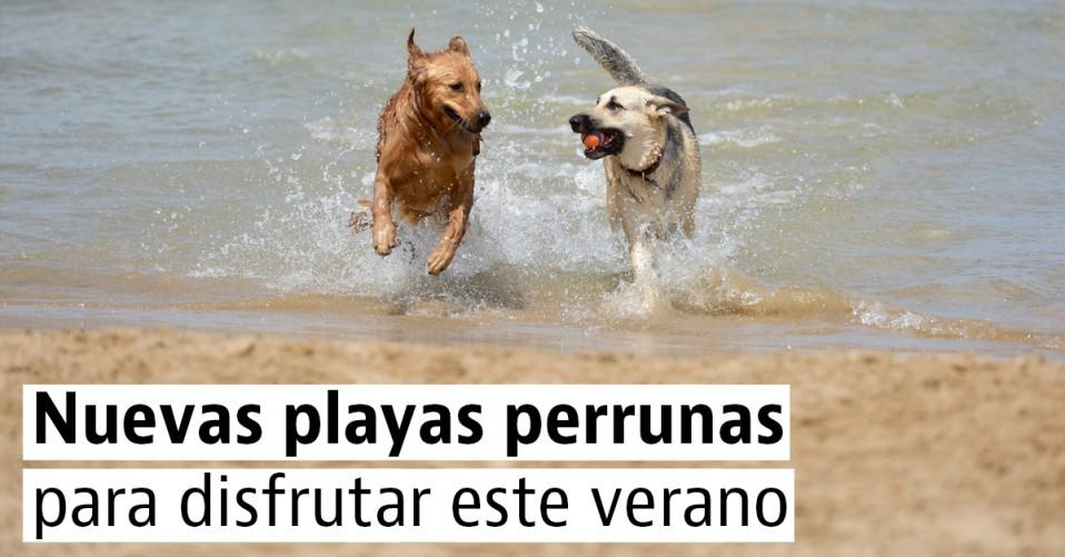 """5 nuevas playas """"pet friendly"""" para ir con tu perro este verano"""