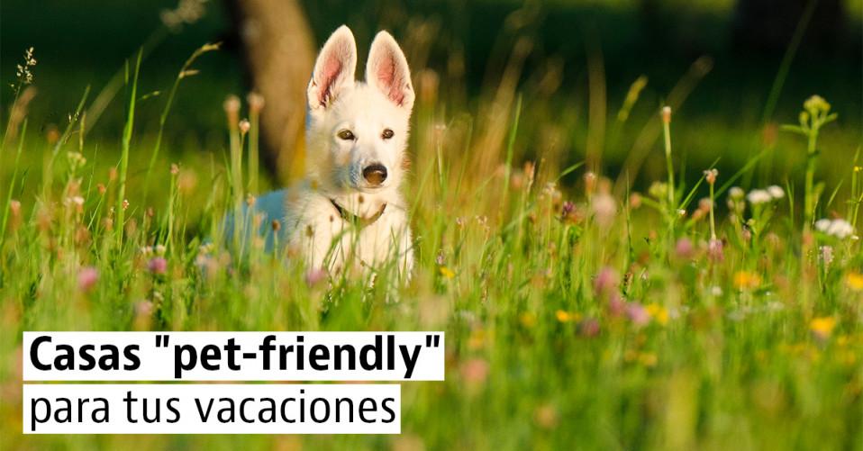 Alojamientos para ir con tu perro en tus próximas vacaciones